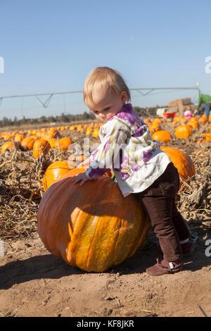 Usa, Oregon, Bend, junge Kinder spielen unter den Kürbisse auf dem jährlichen Pumpkin Patch in der Nähe von terrebone - Stockfoto