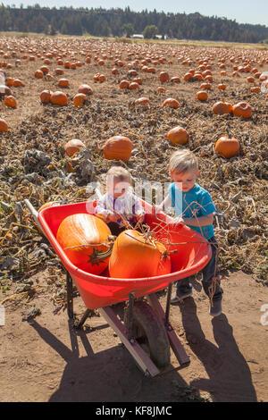 Usa, Oregon, Bend, eine junge Familie beschließt, Kürbisse, die bei der jährlichen Pumpkin Patch in der Nähe von - Stockfoto