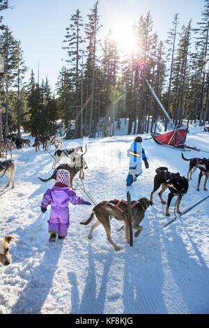 Usa, Oregon, Biegen, ein Junge und ein Mädchen spielen mit den Schlittenhunden am Mt. Bachelor - Stockfoto