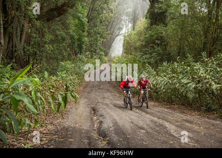 Usa, Hawaii, Big Island, Journalist Daniel Duane und Küchenchef Seamus mullen Mountainbike unten Schlamm Lane von - Stockfoto