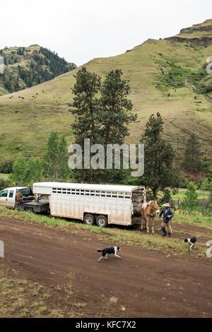 USA, Oregon, Joseph, Cowboys Todd Nash und Cody Ross vorbereiten für ein Vieh bis Laufwerk Big Sheep Creek - Stockfoto