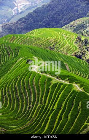 Stock Foto - longji terraces Reisfeldern in der Nähe von Guilin, guangxi - China - Stockfoto