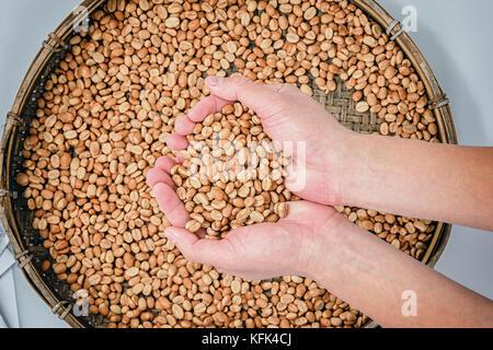 Kaffeebohnen in der Hand und Arabica Bohnen in Bambus Korb für Sonne getrocknet Verarbeitung - Stockfoto