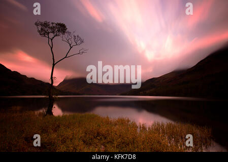 Einsamer Baum auf buttermere Lake, Lake District, Cumbria. England. - Stockfoto