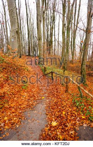Fußweg mit Barriere, die an einem Hügel im Wald an der Küste in Polen - Stockfoto