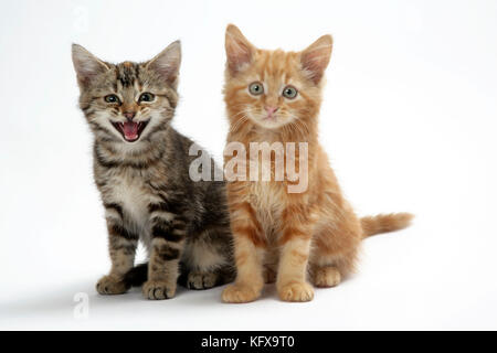 Katze - zwei Kätzchen - Stockfoto