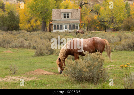 Peaceful Valley Ranch mit Wild Horse, Theodore Roosevelt National Park-South Einheit, North Dakota - Stockfoto