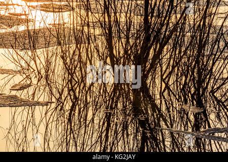 Abstrakte farbenfrohe Frühling Hintergrund mit Eis schwimmt auf dem Wasser, Weidenruten und Spiegelungen im See - Stockfoto
