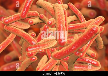 Tuberkulose Bakterien. Computer Abbildung von Mycobacterium Tuberkulose Bakterien, gram-positive stabförmige Bakterien, - Stockfoto