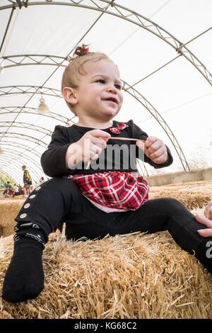 11 Monate alte Lily die Freude von Stroh am Remlinger Farmen, Nelke, Washington, USA entdecken - Stockfoto