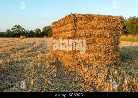 Strohballen in einem Feld nach der Ernte, Nottinghamshire, England, Großbritannien - Stockfoto