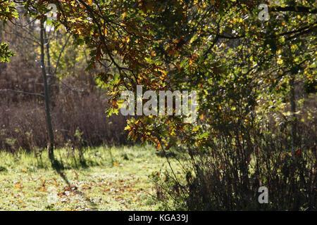 Der Herbst in Merseyside - Stockfoto
