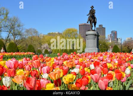 Boston Public Garden im Frühjahr. Low Angle View von George Washington Statue durch bunte Tulpen umrahmt. Weiden - Stockfoto