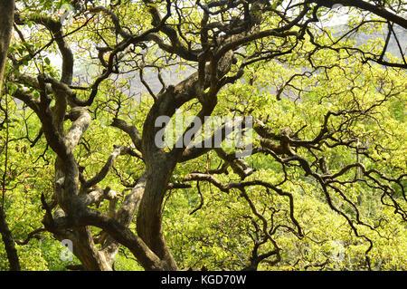 Äste mit grünen Blättern - Stockfoto