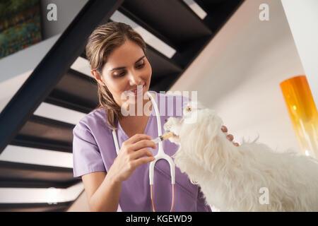 Berufsbildung und Hundebesitzer, die Medizin Droge zu Hund - Stockfoto