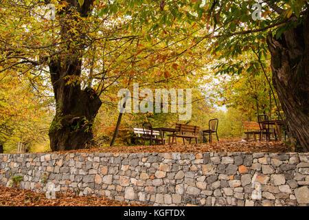 Open air Restorant im Wald - Stockfoto