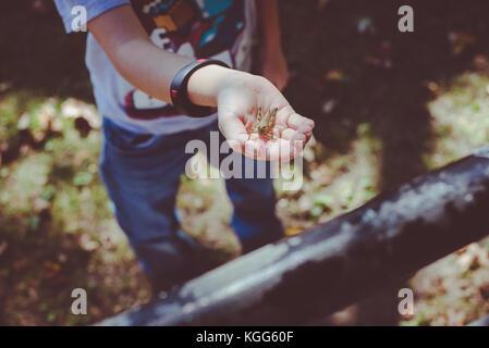 Ein Kind hält eine Heuschrecke in Ihrer Hand - Stockfoto