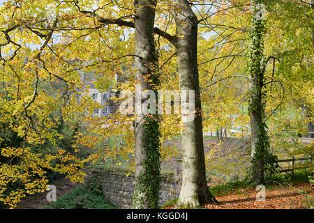 Herbst Buche Bäume entlang dem Bahndamm der alten Cotswold Sapperton Canal-Tunnel und den Tunnel Inn. Coates, Cirencester, - Stockfoto