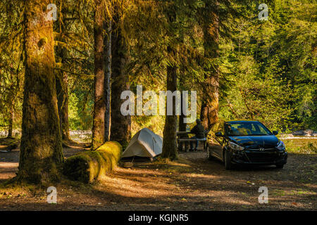 Camping über Queets River, Queets Campground, Olympic National Park, Washington State, USA - Stockfoto