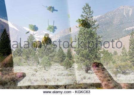 Ein Double Exposure, Inyo National Forest entlang Parker Lake Trail und Blumen in einem Notebook. - Stockfoto