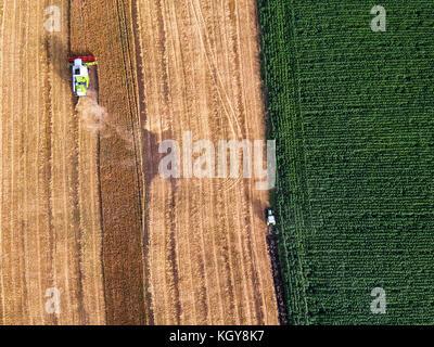 Luftaufnahme auf die Arbeit an dem grossen Weizenfeld kombinieren - Stockfoto