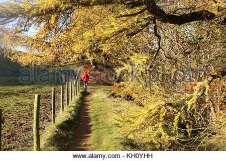 Der Pennine Way Nr. Holwick, Middleton-in-Teesdale, Co Durham, Großbritannien, 12. November 2017 eine Dame geht - Stockfoto