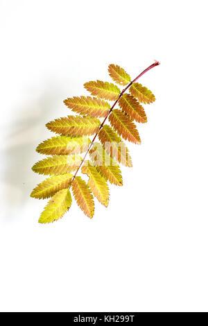Wunderbar Herbst Baum Färbung Blatt Galerie - Ideen färben ...