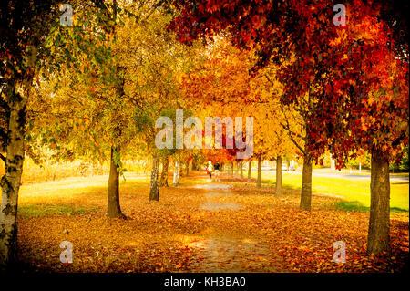 Bäume im Herbst in Australien ändern in schöne Orange, Gelb und Rot. - Stockfoto