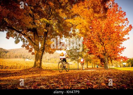 Radfahrer auf dem Murray in die Berge Rail Trail Reiten durch die herrlichen Farben des Herbstes in der Victoria - Stockfoto