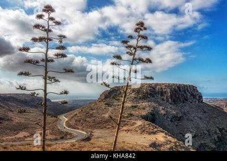Blick von hoch oben am Mirador Degollada de La Yegua an der Südküste von Gran Canaria mit einem Radfahrer auf der - Stockfoto