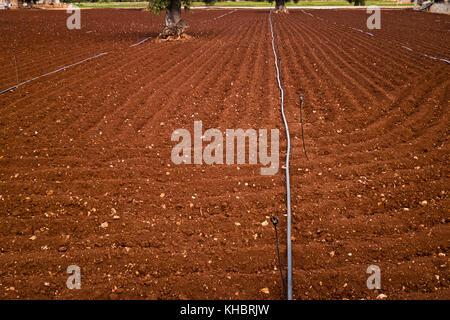 Gepflügten Feldes mit Bewässerungsanlage in Apulien. - Stockfoto