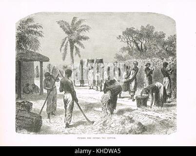 Slaves Ernte und Trocknung Baumwolle, 19. Jahrhundert, United States - Stockfoto