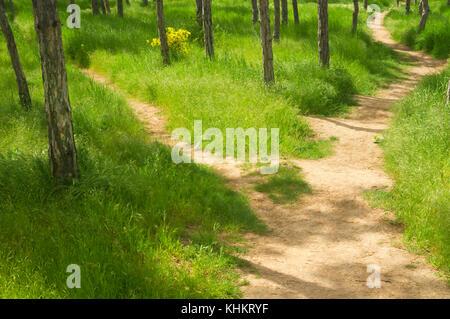 Der Weg unter das hohe Gras im Frühling Park - Stockfoto