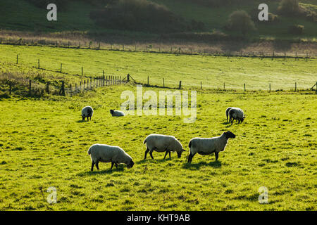 Herbstnachmittag in South Downs National Park, East Sussex, England. - Stockfoto