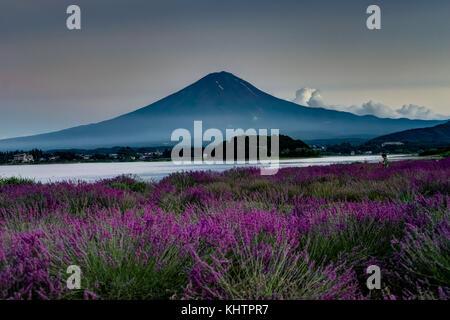 Blick auf den Mount Fuji Lavendel im Sommer mit blauem Himmel und Wolken w - Stockfoto