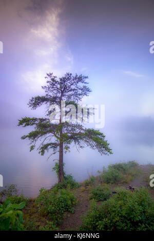 Einsamer Baum auf nebligen See - Stockfoto