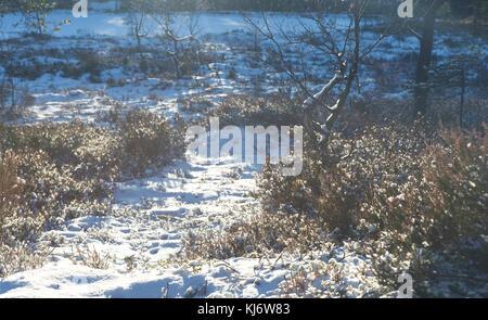 Schnee in Norwegen nach dem ersten Schneefall im November. - Stockfoto