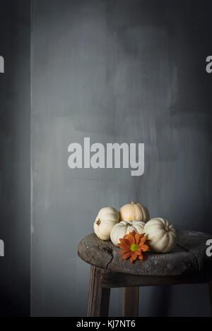 White Mini Kürbisse gegen eine graue Wand - Stockfoto