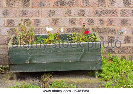 geranien blumen hintergrund mit vintage alte blaue tafeln stockfoto bild 117102341 alamy. Black Bedroom Furniture Sets. Home Design Ideas