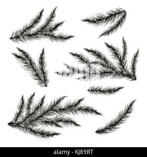 Pine Tree Branches isoliert auf Weiss. Vector Illustration. - Stockfoto