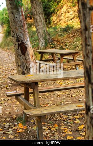 Holzbänke im Wald - Stockfoto