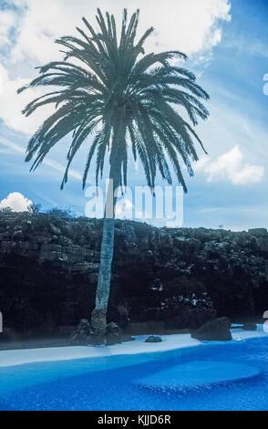 Tropische gardnes mit Palme am Pool der Jameos del Agua auf Lanzarote, Kanarische Inseln. - Stockfoto