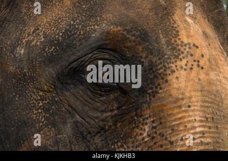 Auge des Elefanten - Stockfoto