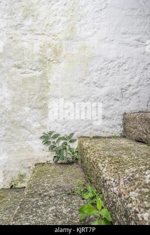 Serie von Granit Schritte mit Unkraut wächst - mögliche Metapher für das Konzept der 'Karriere'. - Stockfoto