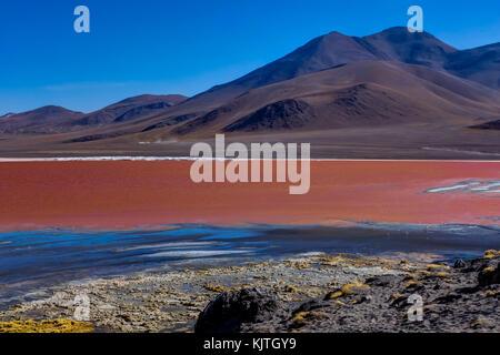 Foto im August 2017 im Altiplano Bolivien, Südamerika: rosa Flamingos an der Laguna Colorada Altiplano Bolivien - Stockfoto