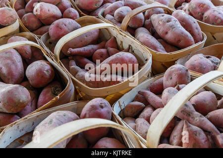 Süsse Kartoffeln in Körben zu produzieren. - Stockfoto