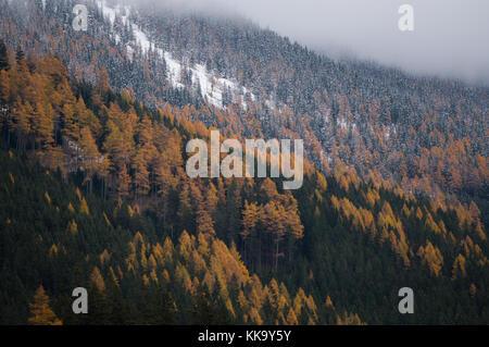 Herbst und Winter in einer hochalpinen Wald - Stockfoto