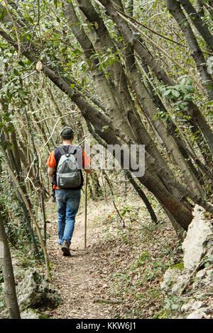 Ein Mann auf einem Trail durch den Wald grün. - Stockfoto