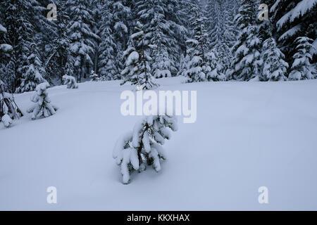 Mount Bachelor, Bend, Oregon, USA, 2. Dezember 2017. Starker Schneefall deckt Bäume am Mount Bachelor Skigebiet.