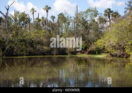 Landschaft bei Dschungel Abenteuer Wildlife Park, Weihnachten, Florida - Stockfoto
